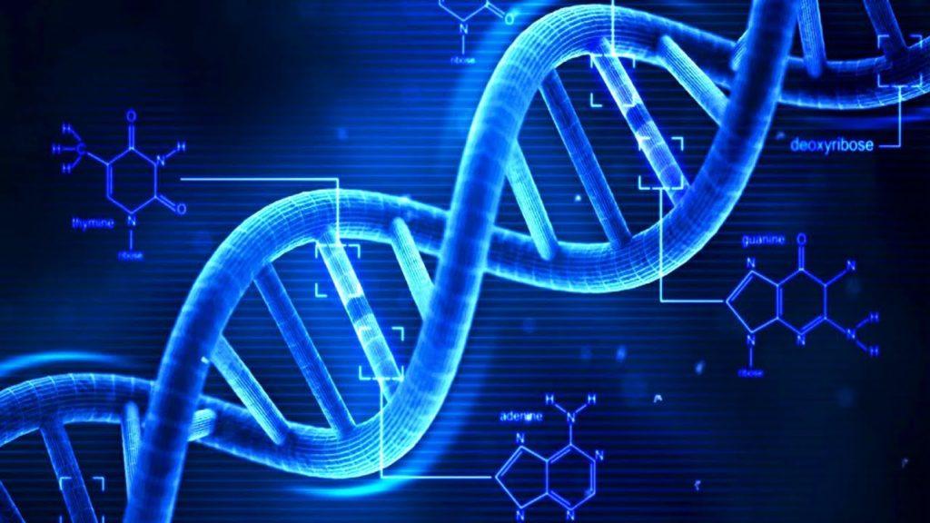 DNA Factors